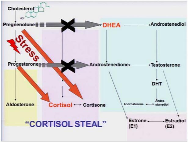 results of testosterone propionate